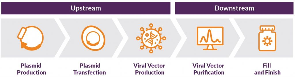 Overview of AAV production workflow for gene therapy