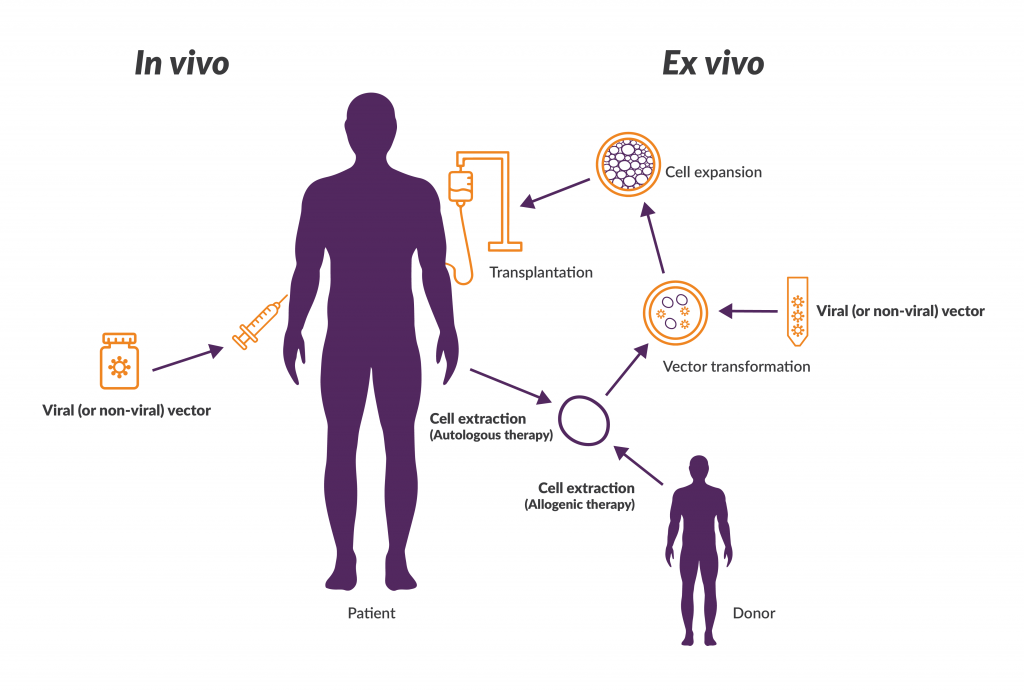 Schematic for in vivo gene therapy and 2 types of ex vivo gene therapies